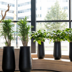 Tall Round Commercial Planters