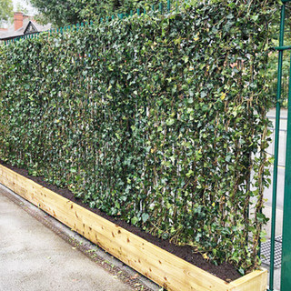 Hedera Helix Screens in Timber Troughs