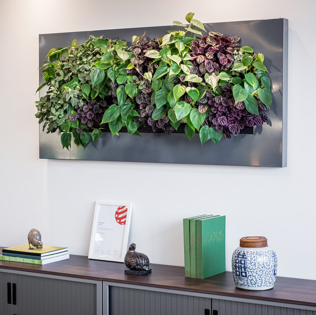 Office Plants Live Picture.jpg