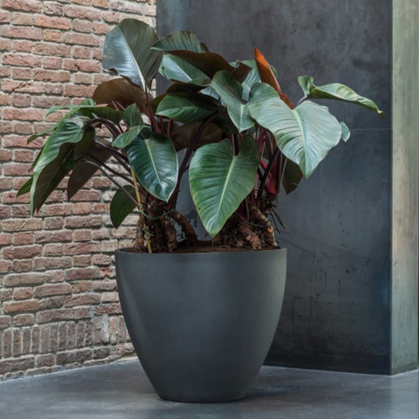 Large commercial planters.jpg