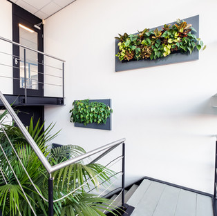 LivePicture Plant Frames For Office Inte