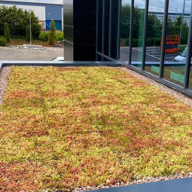 Sedum Green Roof For Eurogarages HQ