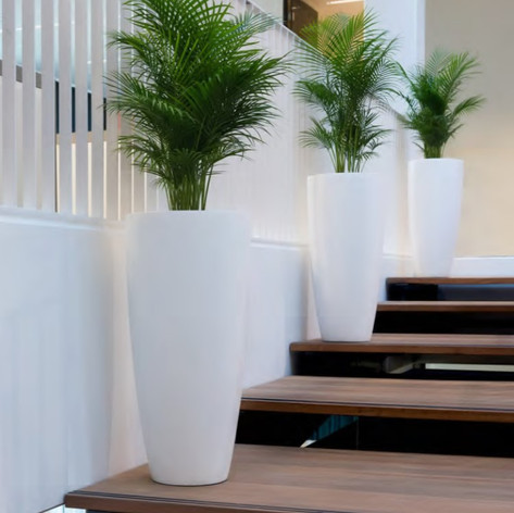 Tall White Office Planters.jpg