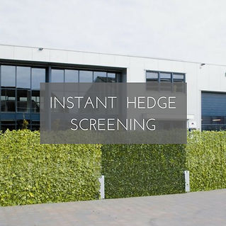 Instant hedera ivy screening