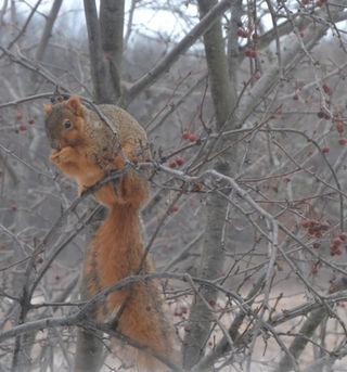 Squirrel's Breakfast