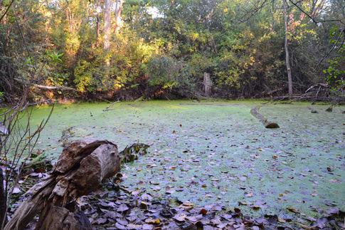 Autumn Swamp