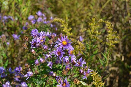 Autumn Prairie Flowers