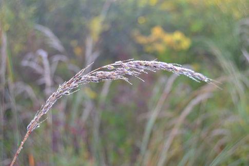 Autumn Prarie Grass