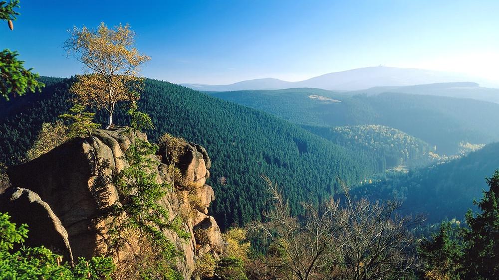 MTB Downhill Trails im Harz