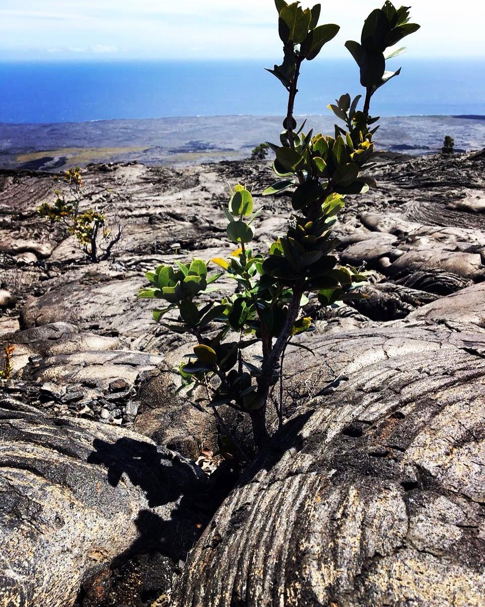 Hawaiʻi-Volcanoes-Nationalpark Hawaii