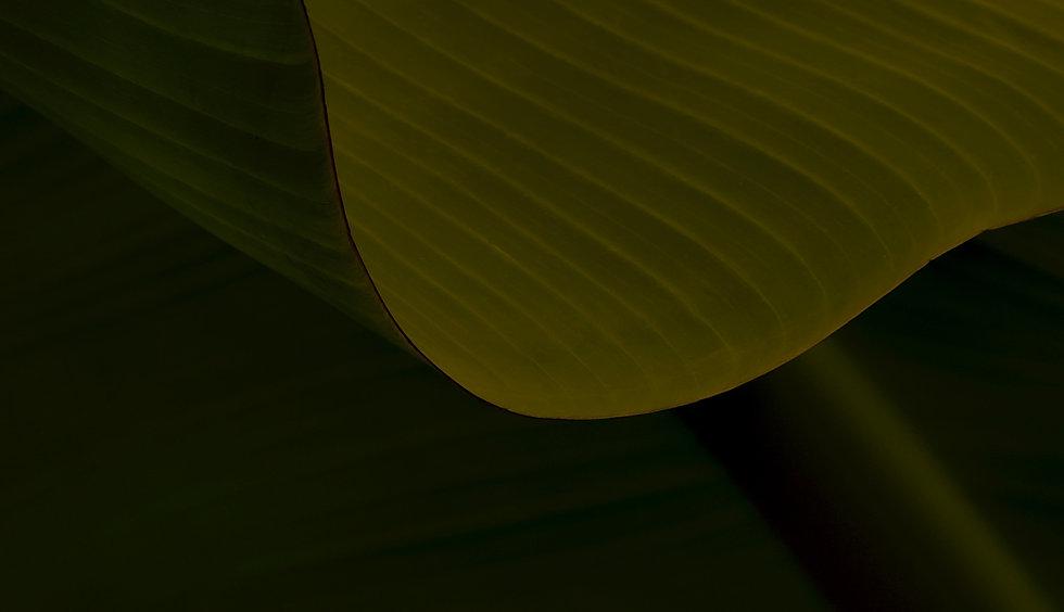 Dayo Coco Home_edited.jpg
