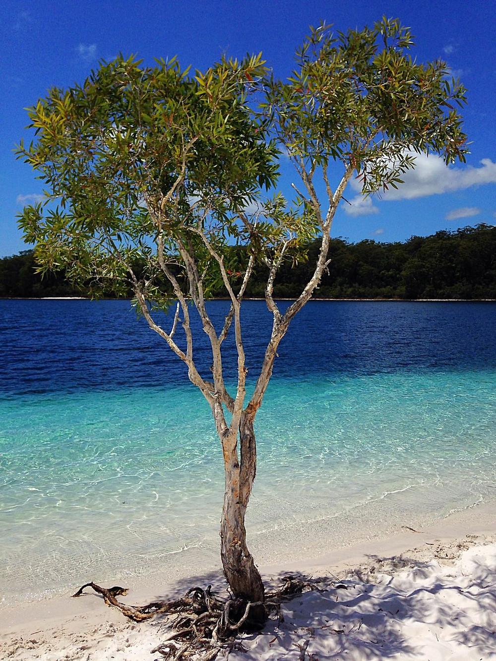 Lake McKenzie Dayo Coco