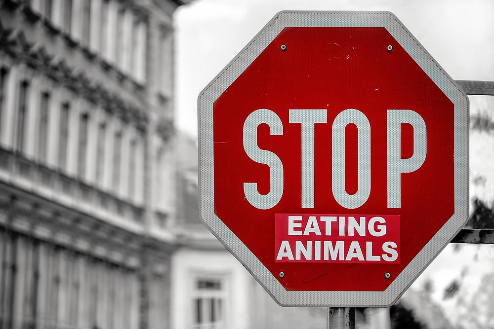Vegane Ernährung. Was erwartet dich?