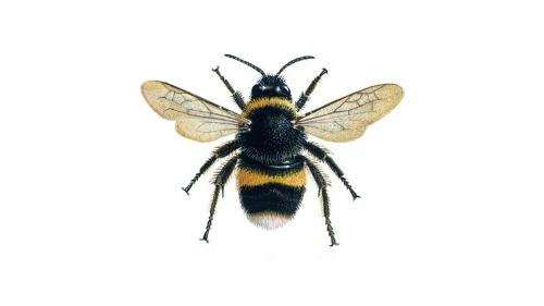 bumblebee_1200x675_edited.jpg