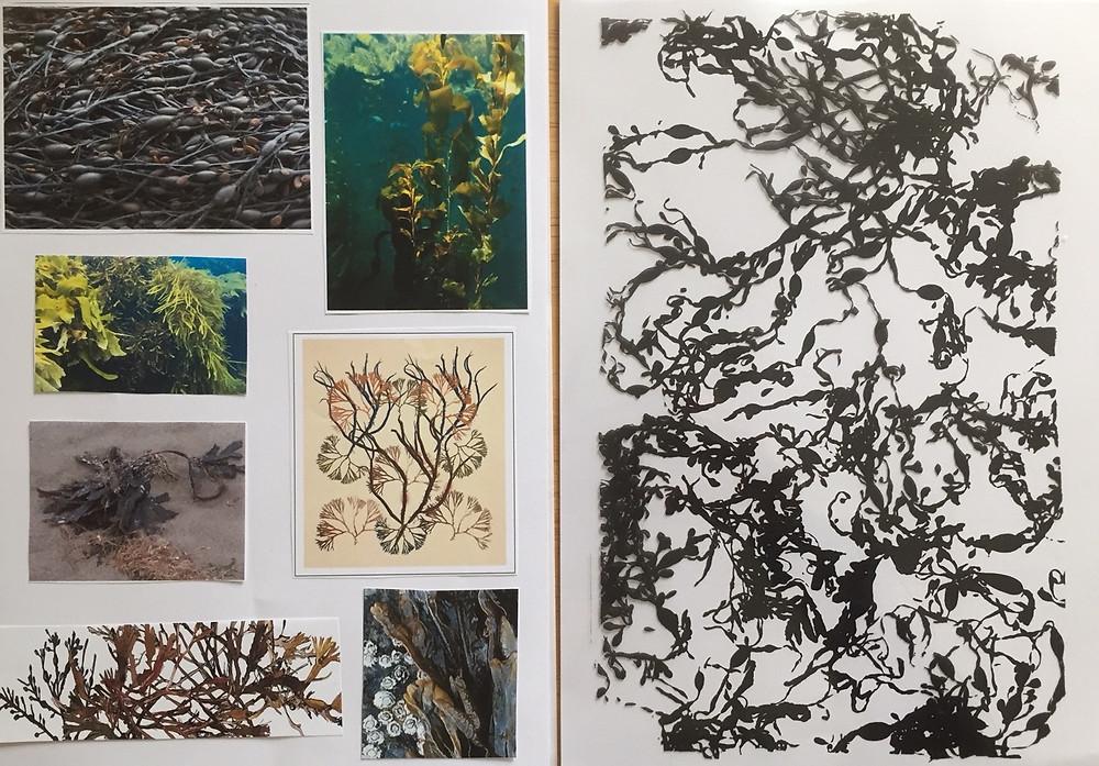 seaweed sketchbook images
