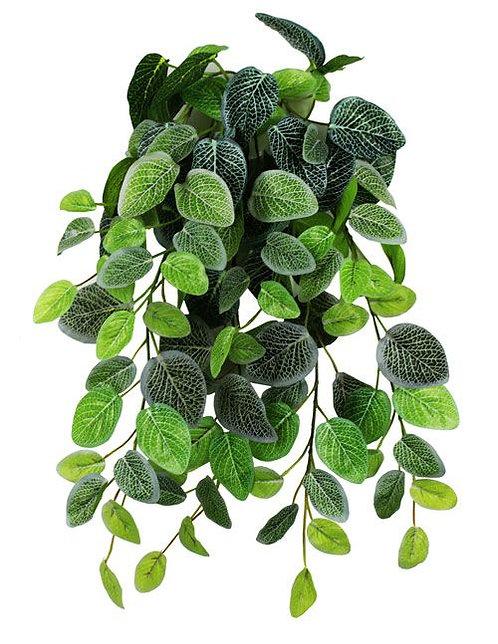 Pangea Hanging Bush Fittonia 60 cm