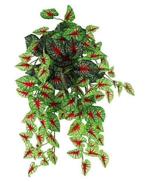Pangea Hanging Bush Caladium 60 cm