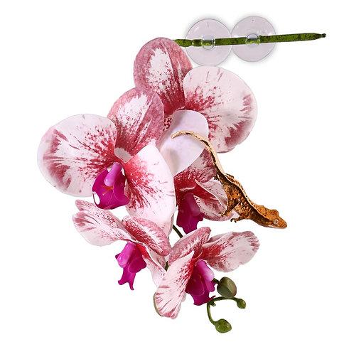Pangea Hängande Orkidé Vit/Rosa