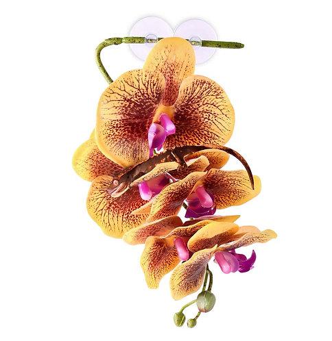 Pangea Hängande Orkidé Gul
