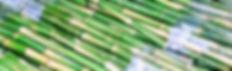Sugar Cane Sticks bundled ready to be juiced
