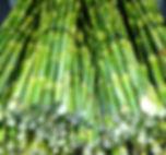 sugarcane sticks fo juicing Australia