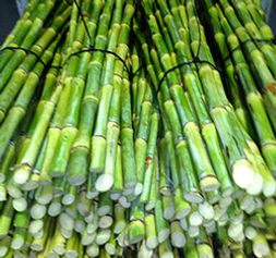 sugarcane sticks fo juicing Australia