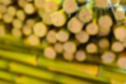 sugarcane for juicing