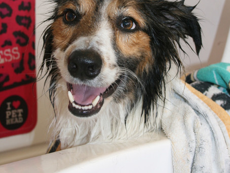 What is included in your groom at Canny Cuts Dog Grooming