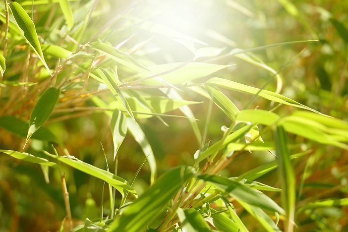 Bambus_5-Elemente_suvan-schlund.JPG
