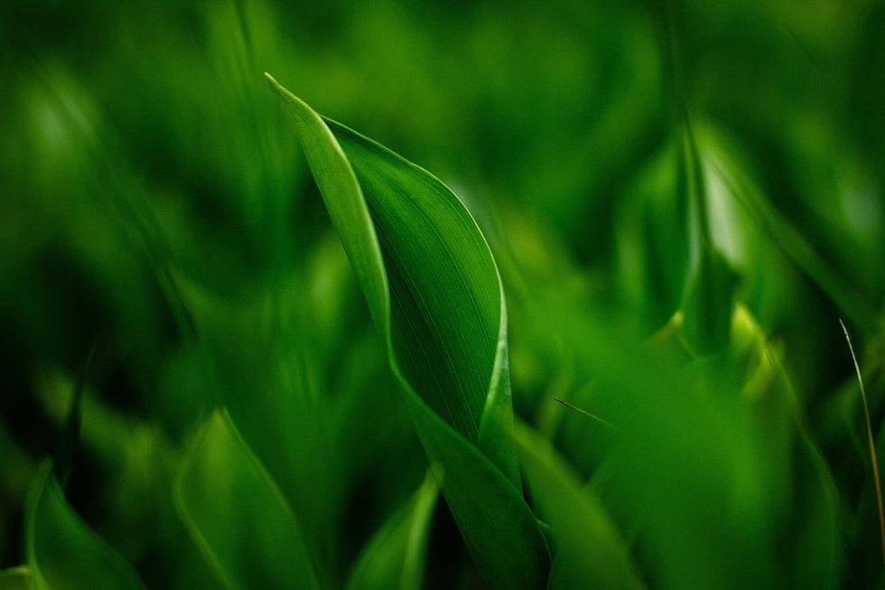 Green Leafy.jpg