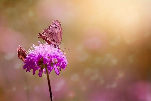 butterflies-1655657_640 (2).jpg
