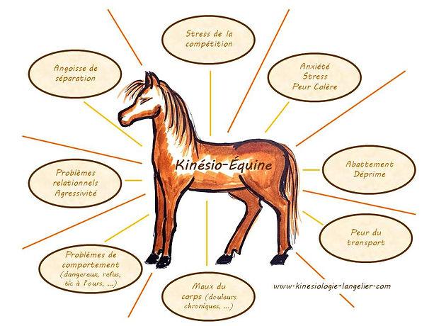 Kinésio-équine 2.jpg