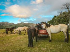 La Kinésiologie Équine, un plus pour l'intégration et le bien-être des chevaux au pré!