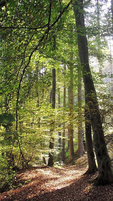 forêt_chemin.jpg