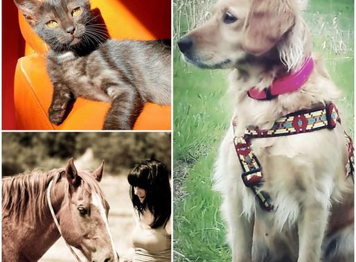 KINÉSIOLOGIE ANIMALE et ADOPTION, une aide précieuse pour accueillir votre nouveau compagnon!