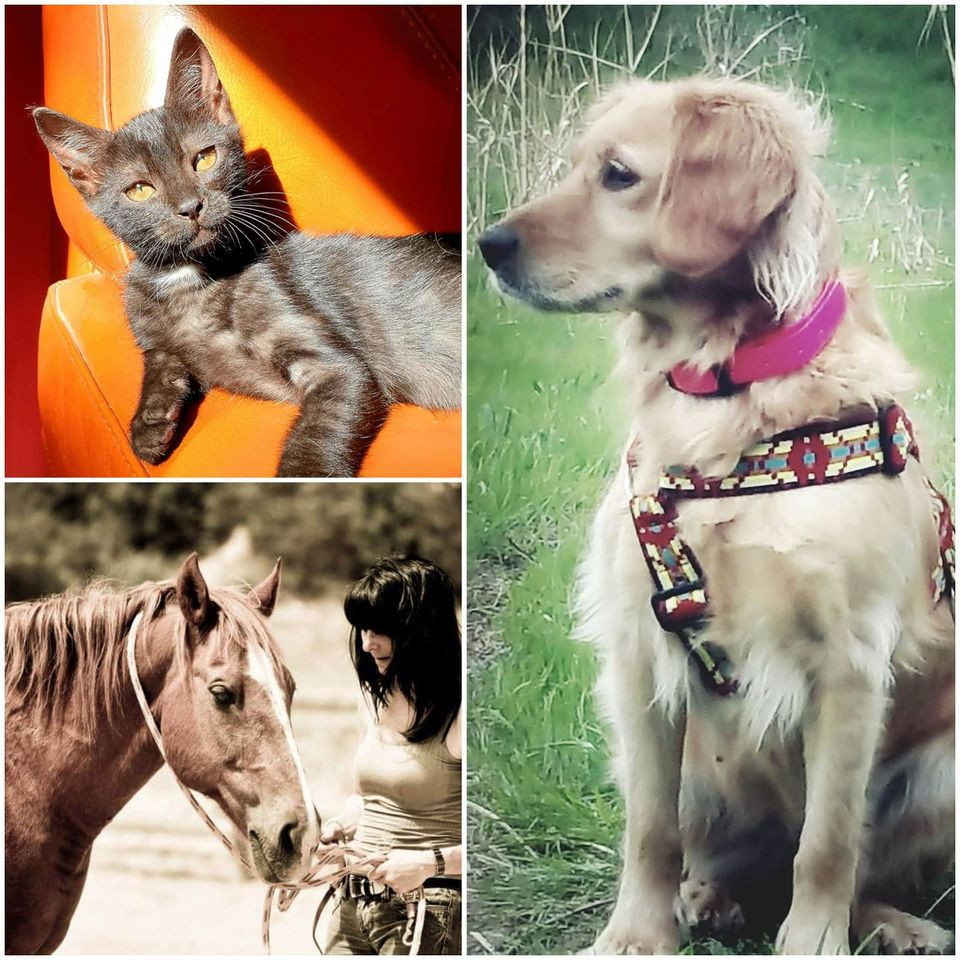 kinésiologie animale kinésio-équine adoption chien chat cheval