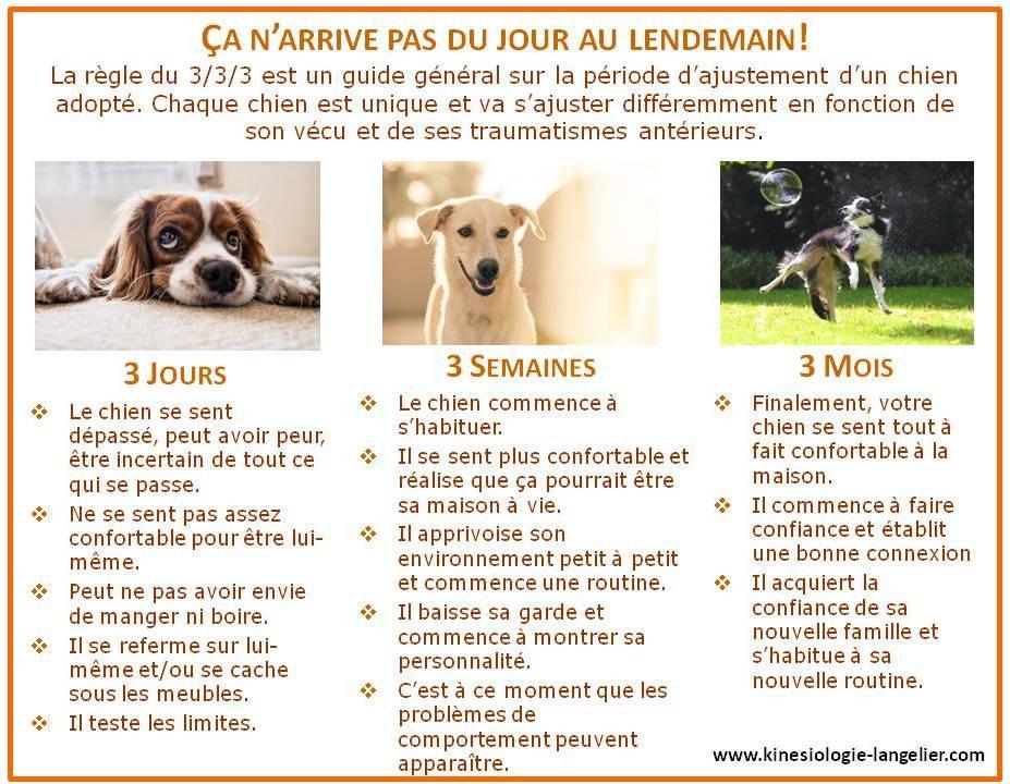 kinésiologie animale adoption chien