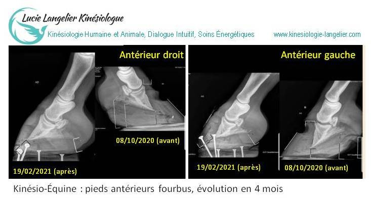 kinésio-équine kinésiologie animale fourbure cheval Lucie Langelier