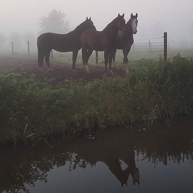 Paarden in de mist te Wijde Wormer