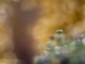 Korstmos (1) - Arnhemsmeiske verwondert ...