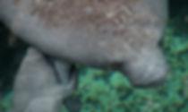 zen als een zeekoe - Arnhemsmeiske verwondert ...
