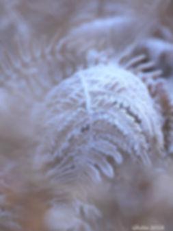 Winter - Ghita Pluijmaekers - Gastblog Boeksz