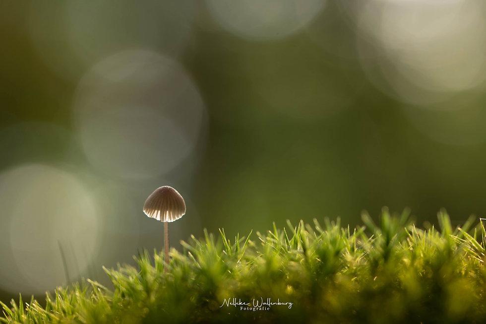 Fotograferen in de herfst - Nelleke Wallenburg