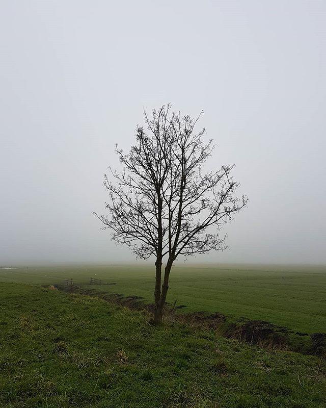 Mistige ochtend in Wormer
