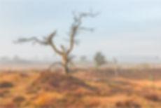 Kalmthoutse Heide - Karin de Bruin