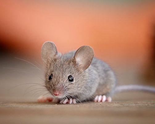 Muizenissen - Marleen van Eijk