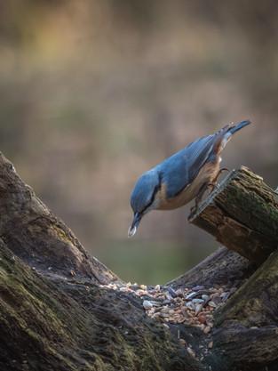 De vogelhut en het boomklevertje - Janneke van der Pol