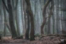 Witbalans op kunstlicht - Nelleke Wallenburg