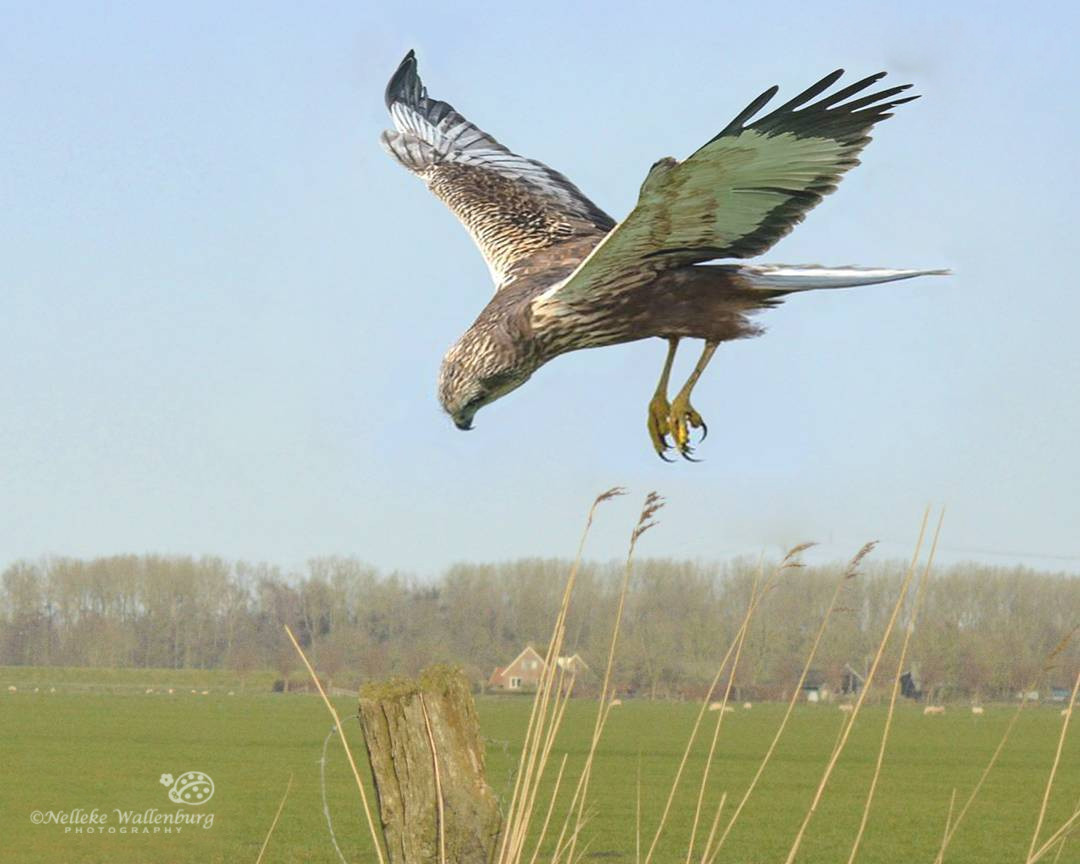 Hoe fotografeer je een vliegende vogel