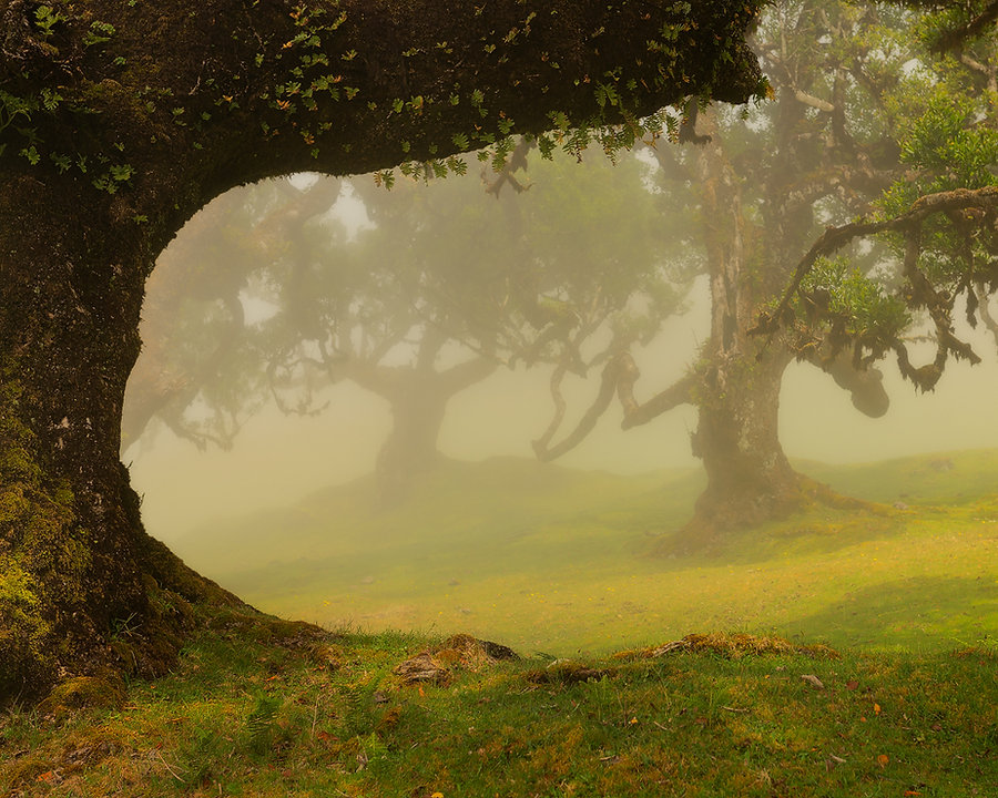Fog Forest Fanal - Jos Pannekoek